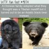 Pets mistaken identity