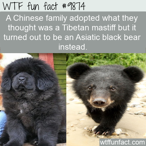 fun fact adopted bear instead of dog