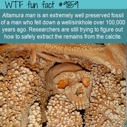 fun fact altamura man fossil