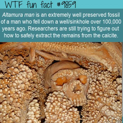 fun fact altamura man fossil