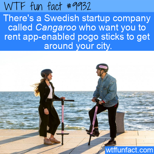 fun fact cangaroo pogo sticks