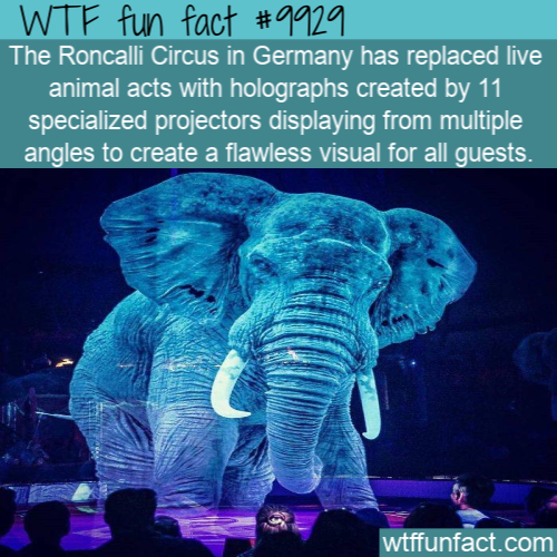 fun fact holographic circus