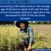 Average Japanese farmers age