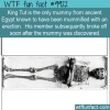 Fun Fact – Missing mummified member
