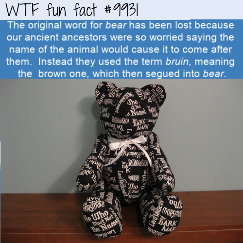 fun fact lost the word for bear