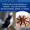 Food Fact – Icelanders eat Puffin