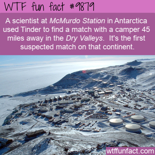 fun fact tinder in antarctica