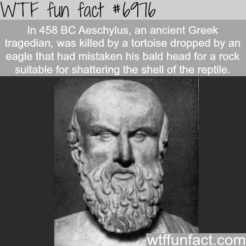 1000 ways to die - WTF fun fact