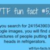 241543903 google images