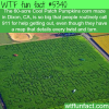 60 acre maze wtf fun facts