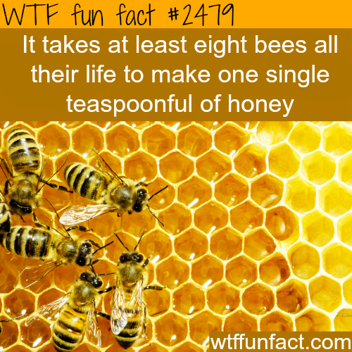 8 bees make a spoon of honey in their life time -WTF funfacts