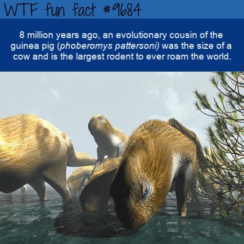 8 million years ago