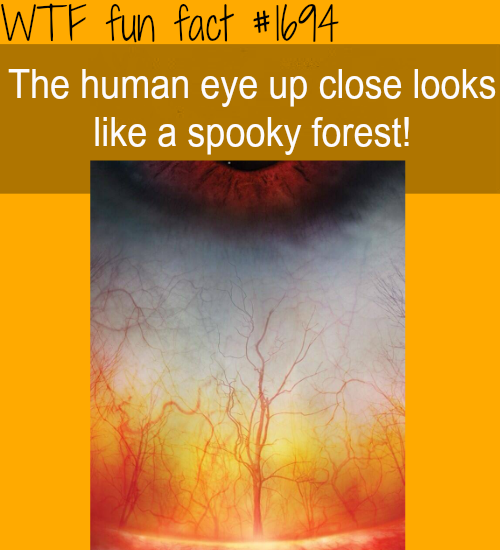 A close up: Human eyes - WTF fun facts