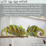 a conflict between chameleons is more likely to be