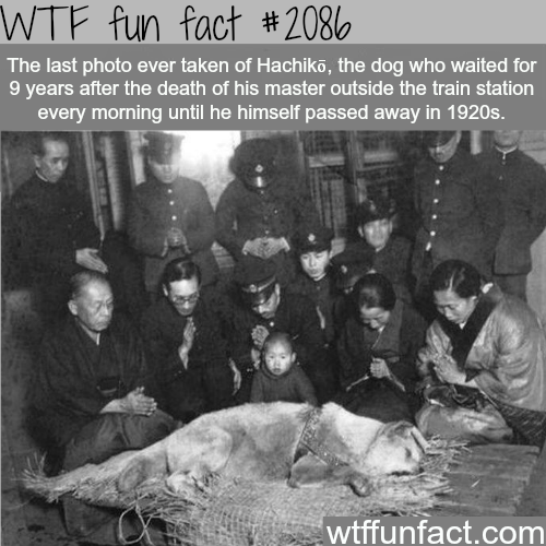A dog waits 9 years for his master - WTF fun facts