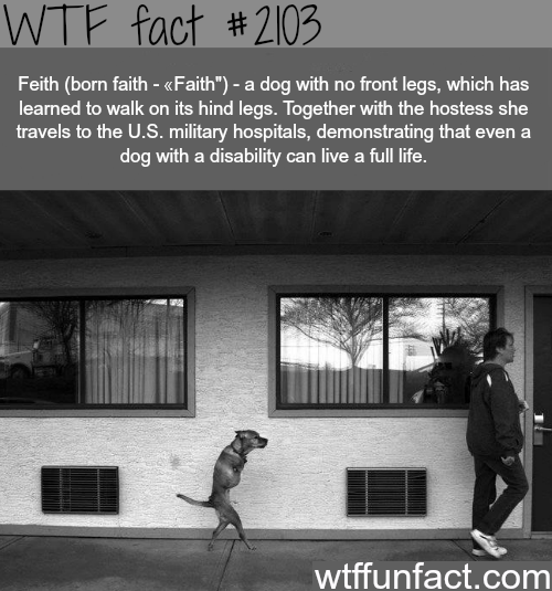 A dog with no frong legs - WTF fun facts