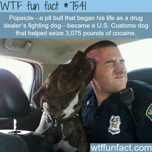 A drug dealer's fighting dog became a police dog - WTF fun facts