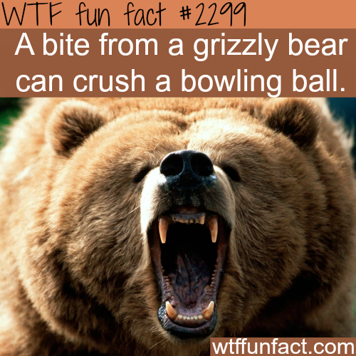 A grizzly bear bite - WTF fun facts