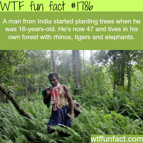 A man in India plants a whole forest - WTF fun facts