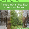 a picture in 365 slices