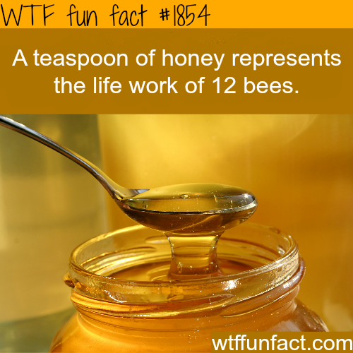 A teaspoon of honey - WTF fun facts