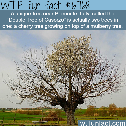 A tree growing on top of a tree - WTF fun fact