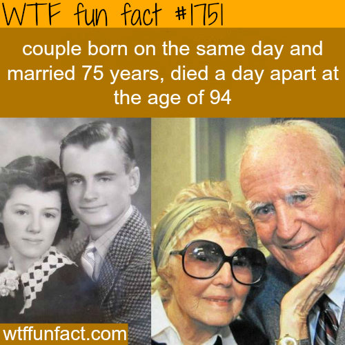 A true love story - WTF fun facts