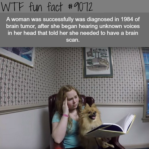 A woman did a brain scan after a voice in her head told her so… - WTF fun facts