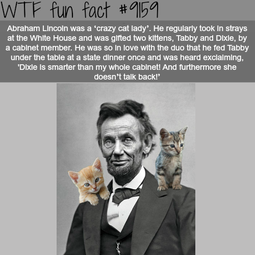 "Abraham Lincoln was a ""crazy cat lady"" - WTF Fun Facts"