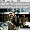 adolf hitlers dog blondi wtf fun facts