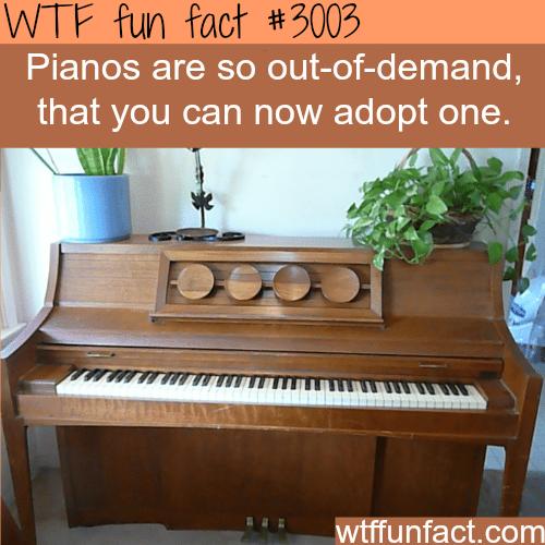 Adopt a piano -WTF fun facts