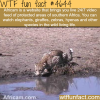 africam wtf fun facts