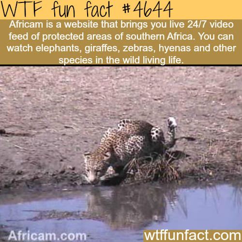 Africam - WTF fun facts