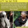 african grey parrot that knows more than 900 words
