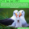 albatross seabirds stay in a relationship for 45