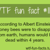 albert einstein theory honey bees
