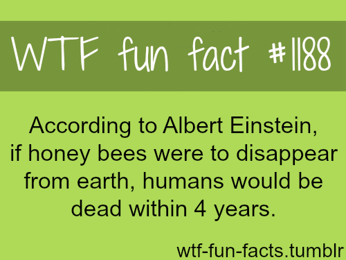 Albert Einstein theory -  honey bees