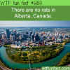 alberta canada is rat free wtf fun fact