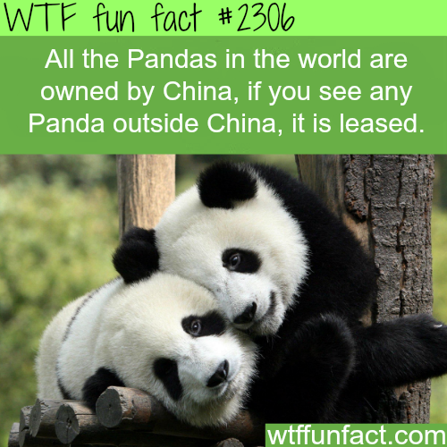 All Pandas are owned by China - WTF fun facts