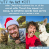 allan dixon and the art of animal selfie wtf fun
