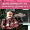 alpha and beta wolves wtf fun facts