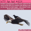 amazing photographs of a crow taking a rest on the back