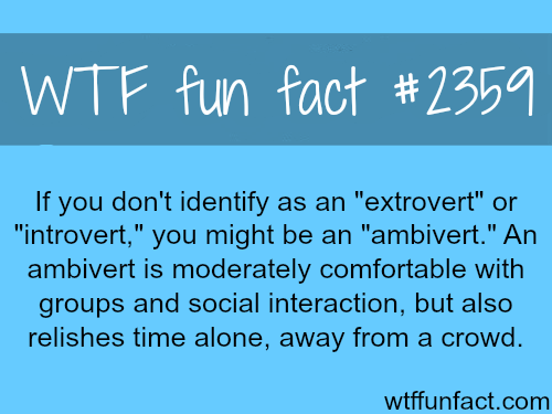 """Ambivert"" Meaning - WTF fun facts"