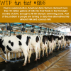american dairy farmers wtf fun facts