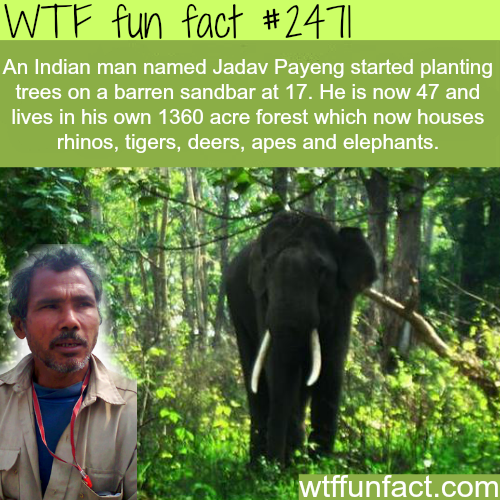 An Indian man plants his own forest - WTF fun facts