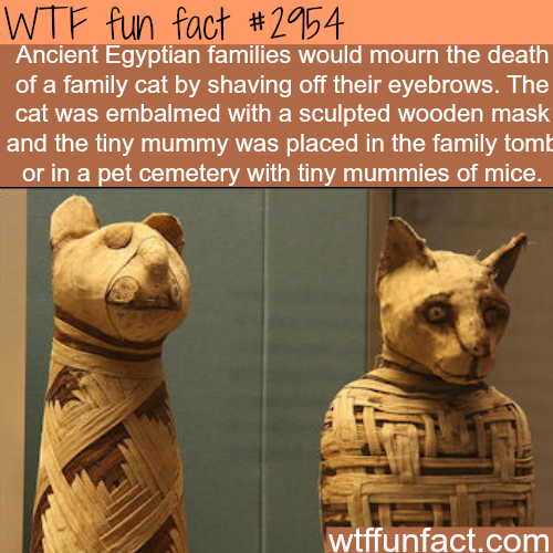 Ancient Egyptians and cats -  WTF fun facts