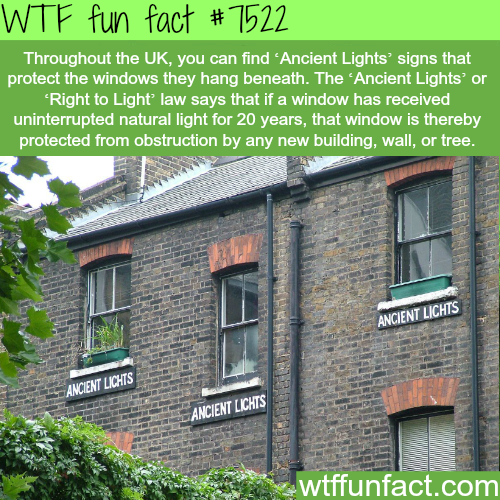 Ancient Lights - WTF FUN FACTS