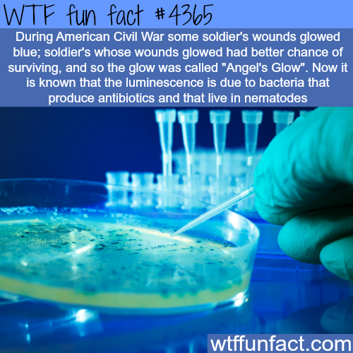 Angel's Glow -  WTF fun facts