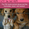 animal abuse is tracked by the fbi wtf fun facts