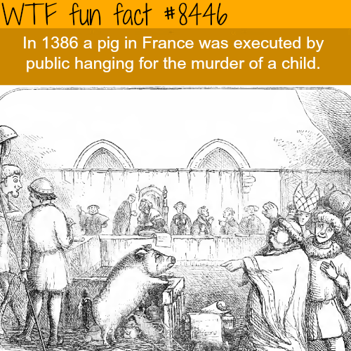 Animal trial - WTF fun facts